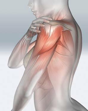 El hombro y su dolor - Fisioterapia y Podología