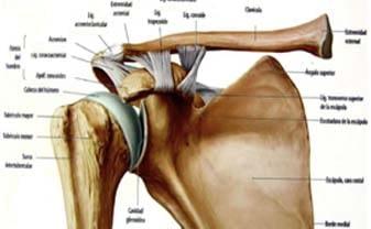 El hombro y su dolor